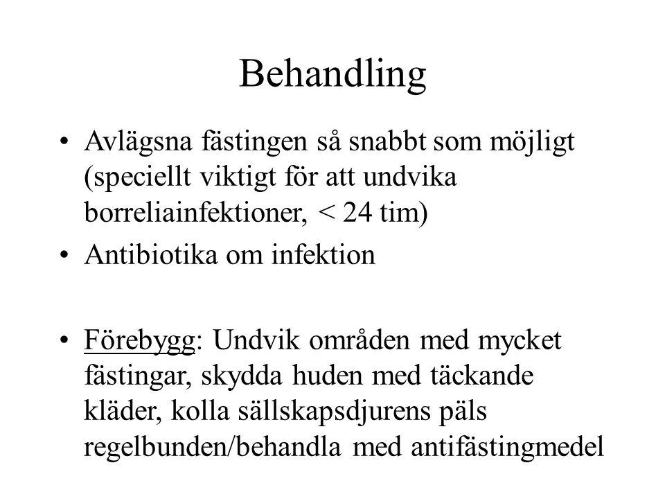 Behandling Avlägsna fästingen så snabbt som möjligt (speciellt viktigt för att undvika borreliainfektioner, < 24 tim) Antibiotika om infektion Förebyg