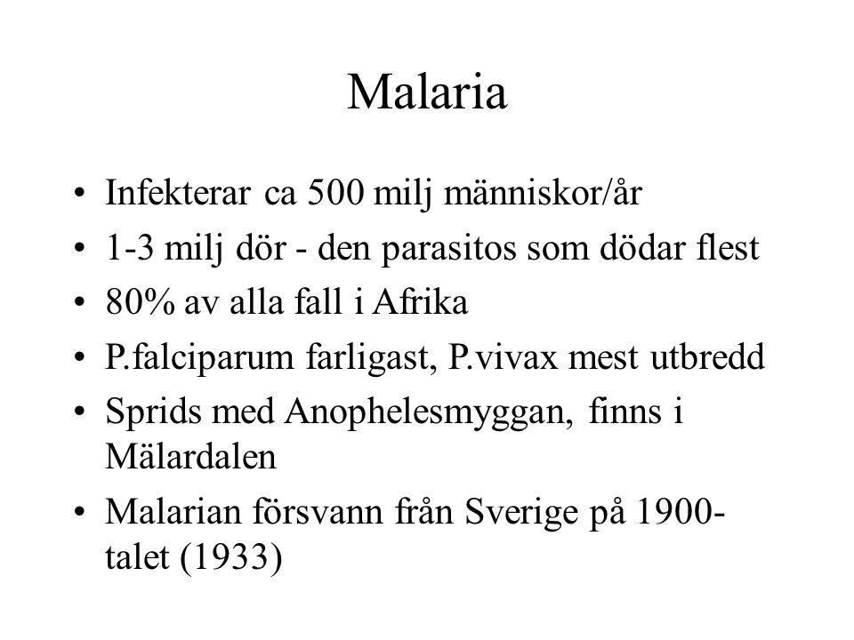 Malaria Infekterar ca 500 milj människor/år 1-3 milj dör - den parasitos som dödar flest 80% av alla fall i Afrika P.falciparum farligast, P.vivax mes