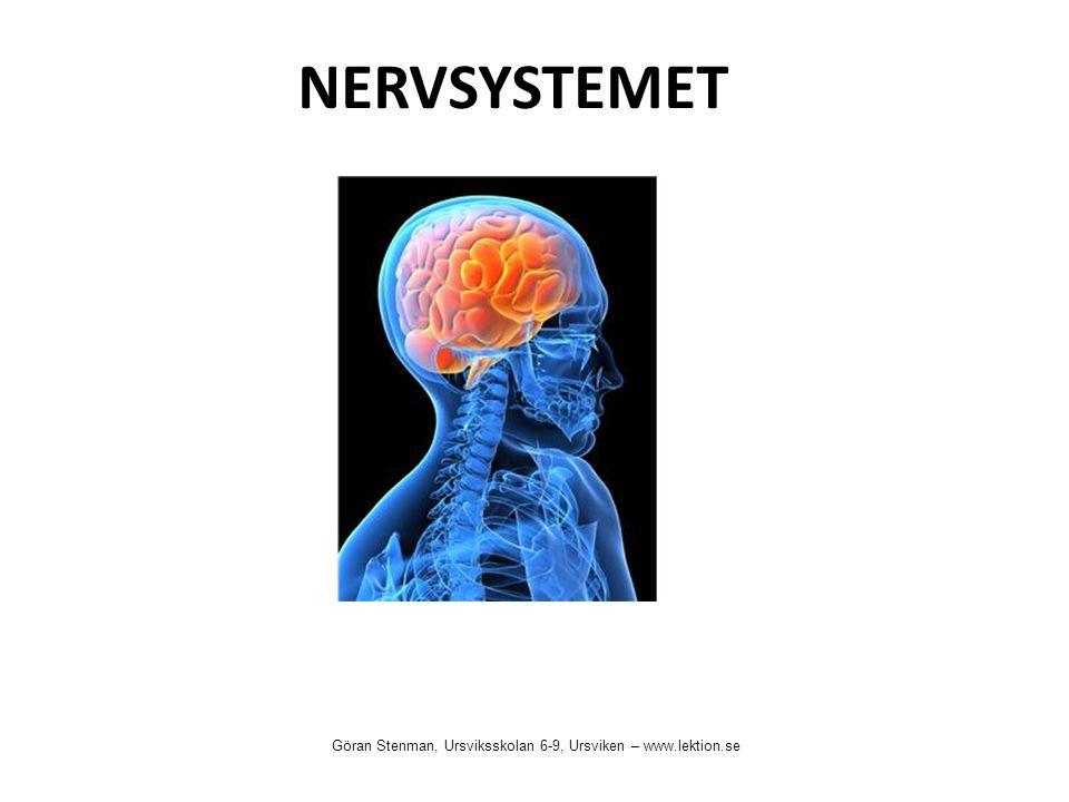 NERVSYSTEMET Göran Stenman, Ursviksskolan 6-9, Ursviken – www.lektion.se