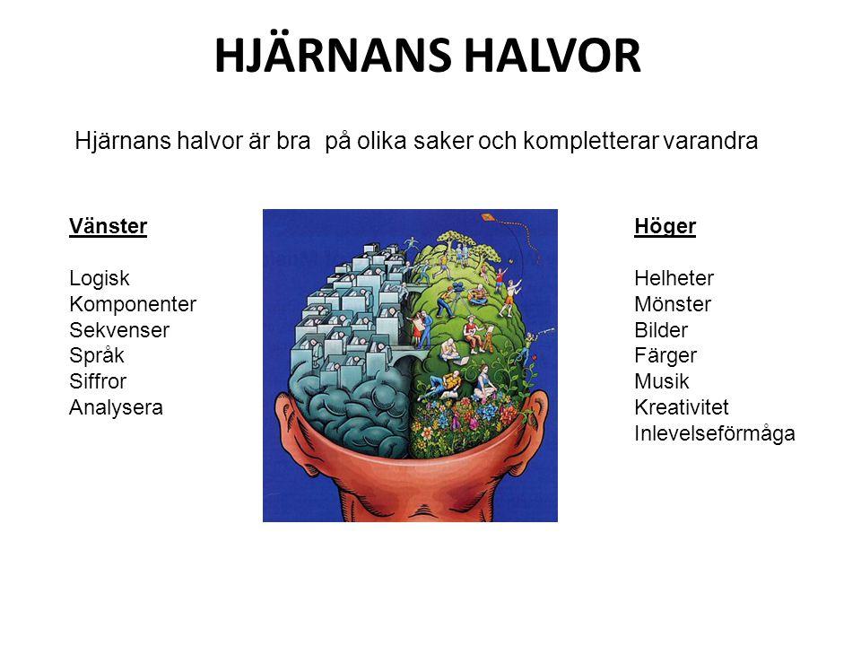 HJÄRNANS HALVOR Hjärnans halvor är bra på olika saker och kompletterar varandra Vänster Logisk Komponenter Sekvenser Språk Siffror Analysera Höger Hel