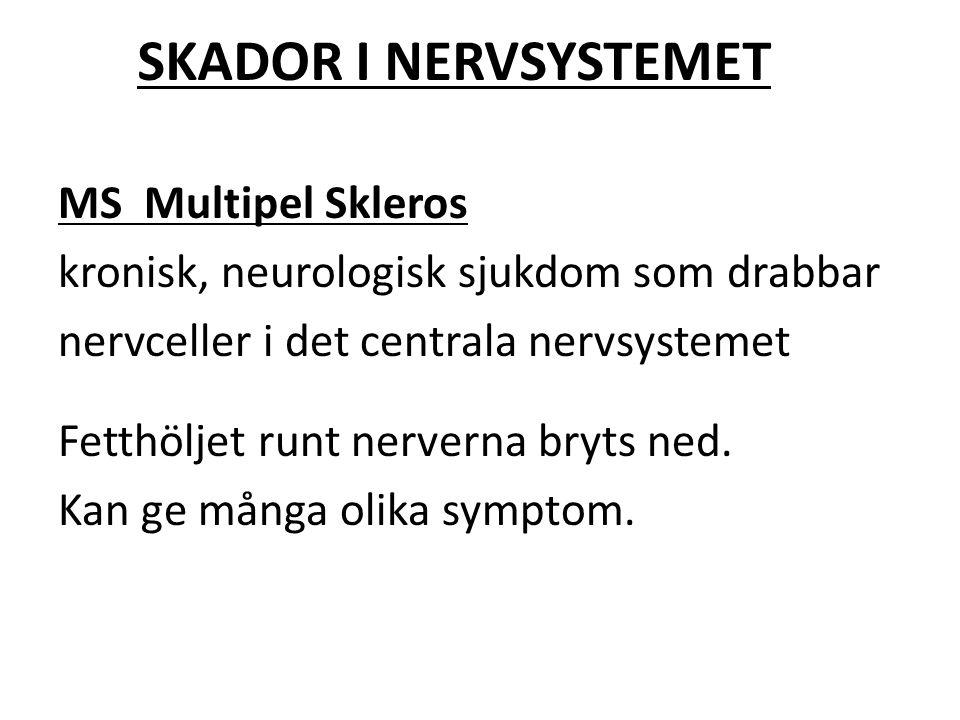 SKADOR I NERVSYSTEMET MS Multipel Skleros kronisk, neurologisk sjukdom som drabbar nervceller i det centrala nervsystemet Fetthöljet runt nerverna bry