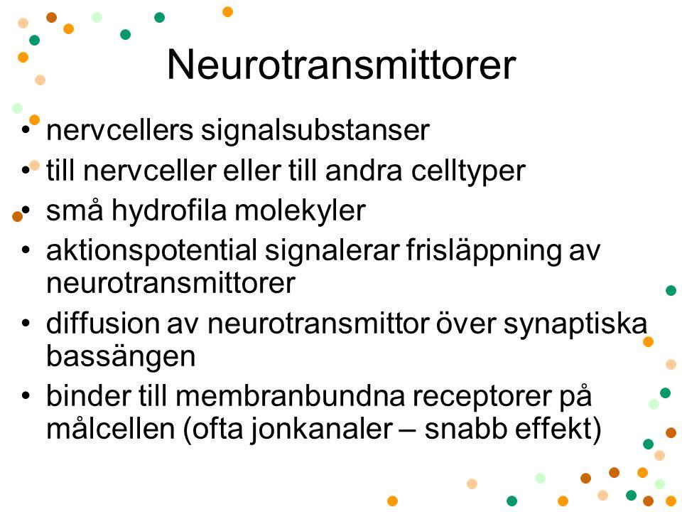 Neurotransmittorer nervcellers signalsubstanser till nervceller eller till andra celltyper små hydrofila molekyler aktionspotential signalerar frisläp
