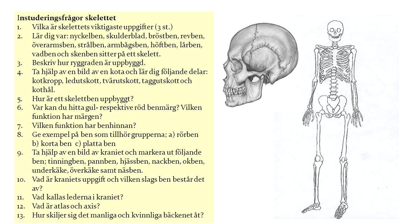 Instuderingsfrågor skelettet 1.Vilka är skelettets viktigaste uppgifter (3 st.) 2.Lär dig var: nyckelben, skulderblad, bröstben, revben, överarmsben,