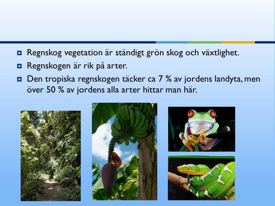  Regnskog vegetation är ständigt grön skog och växtlighet.  Regnskogen är rik på arter.  Den tropiska regnskogen täcker ca 7 % av jordens landyta,