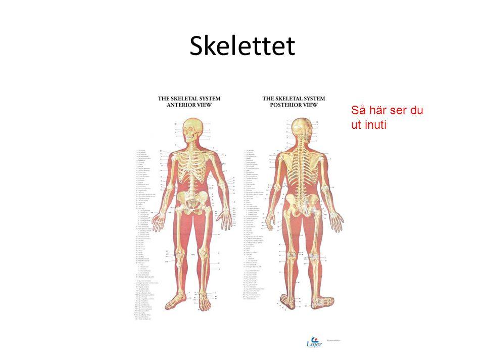 Skador på ryggraden  Om du bär fel eller sitter fel eller går och står fel kan din rygg eller nacke skadas.