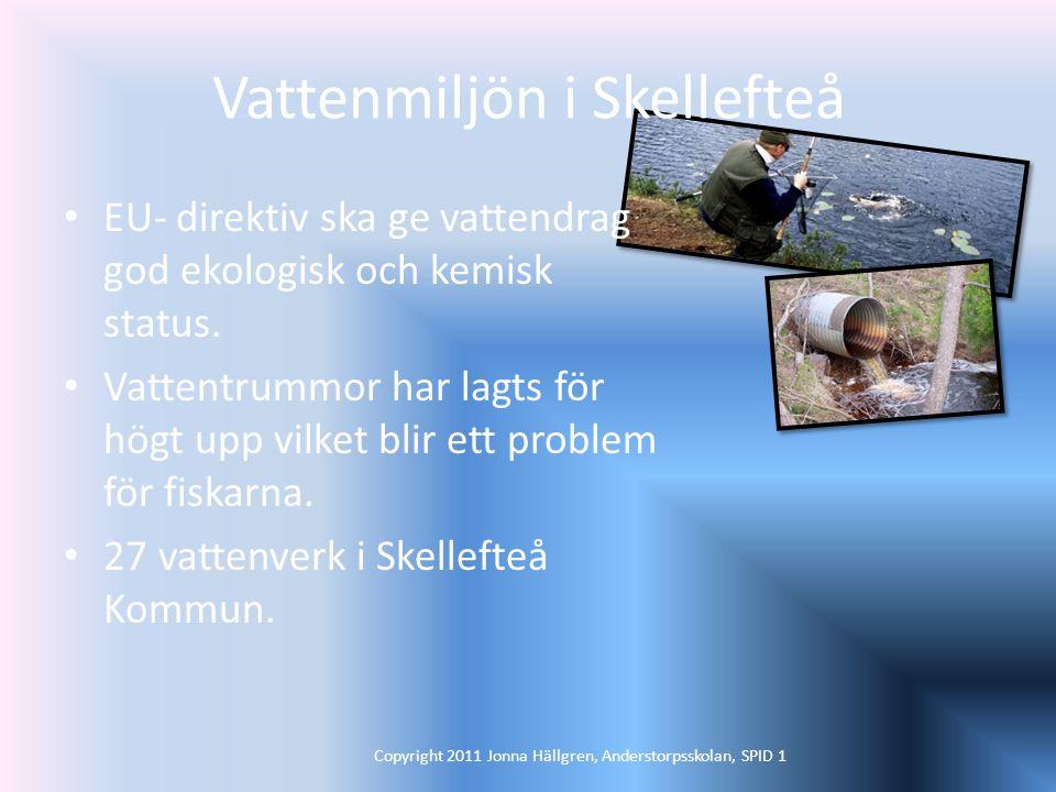 Vattenmiljön i Skellefteå EU- direktiv ska ge vattendrag god ekologisk och kemisk status.