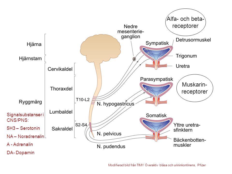 Muskarin- receptorer Alfa- och beta- receptorer Signalsubstanser i CNS/PNS: 5H3 – Serotonin NA – Noradrenalin A - Adrenalin DA- Dopamin Modifierad bil