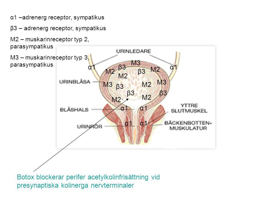 M3 M2 α1 β3 M2 α1 –adrenerg receptor, sympatikus β3 – adrenerg receptor, sympatikus M2 – muskarinreceptor typ 2, parasympatikus M3 – muskarinreceptor