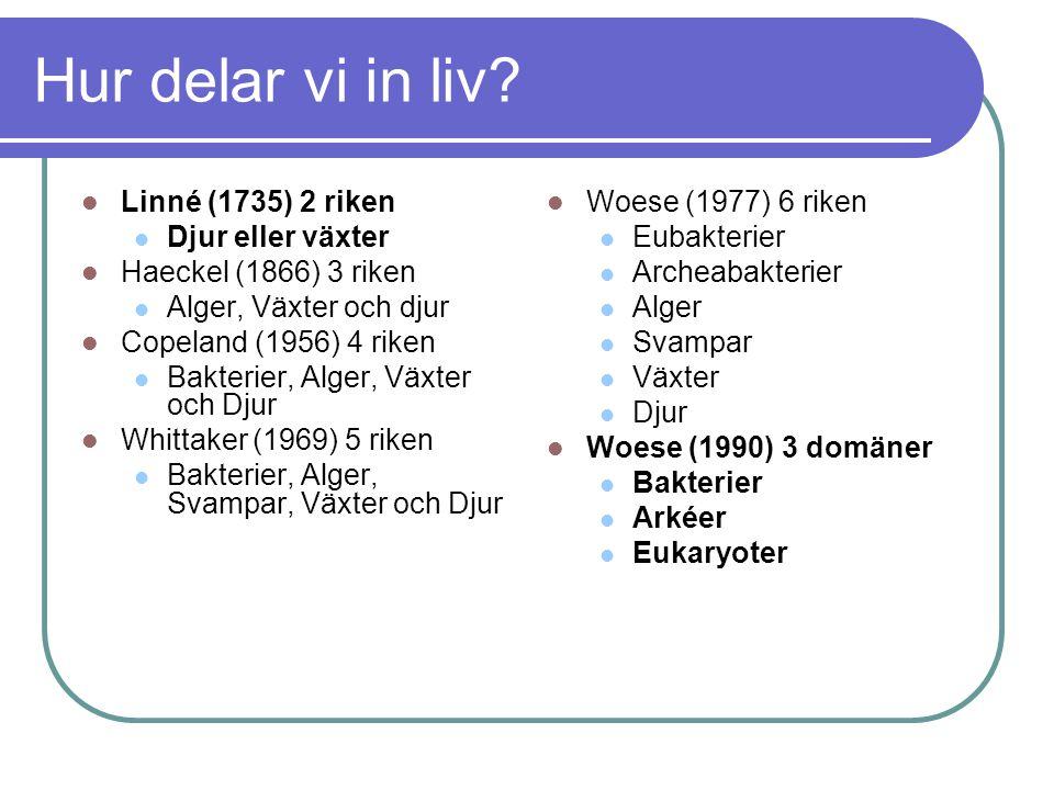 Hur delar vi in liv? Linné (1735) 2 riken Djur eller växter Haeckel (1866) 3 riken Alger, Växter och djur Copeland (1956) 4 riken Bakterier, Alger, Vä