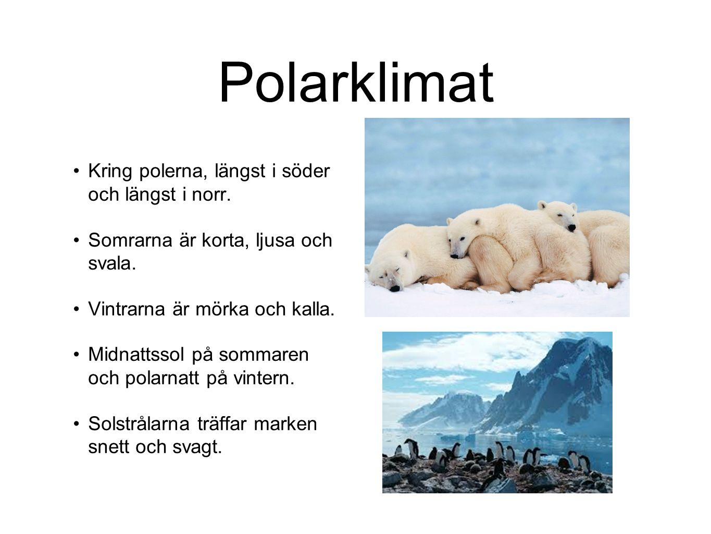 Polarklimat Kring polerna, längst i söder och längst i norr. Somrarna är korta, ljusa och svala. Vintrarna är mörka och kalla. Midnattssol på sommaren