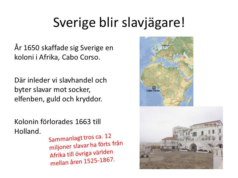 Sverige blir slavjägare! År 1650 skaffade sig Sverige en koloni i Afrika, Cabo Corso. Där inleder vi slavhandel och byter slavar mot socker, elfenben,