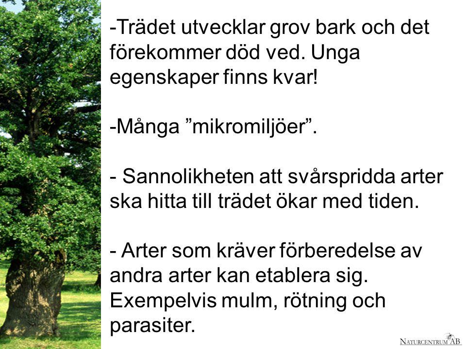 """-Trädet utvecklar grov bark och det förekommer död ved. Unga egenskaper finns kvar! -Många """"mikromiljöer"""". - Sannolikheten att svårspridda arter ska h"""
