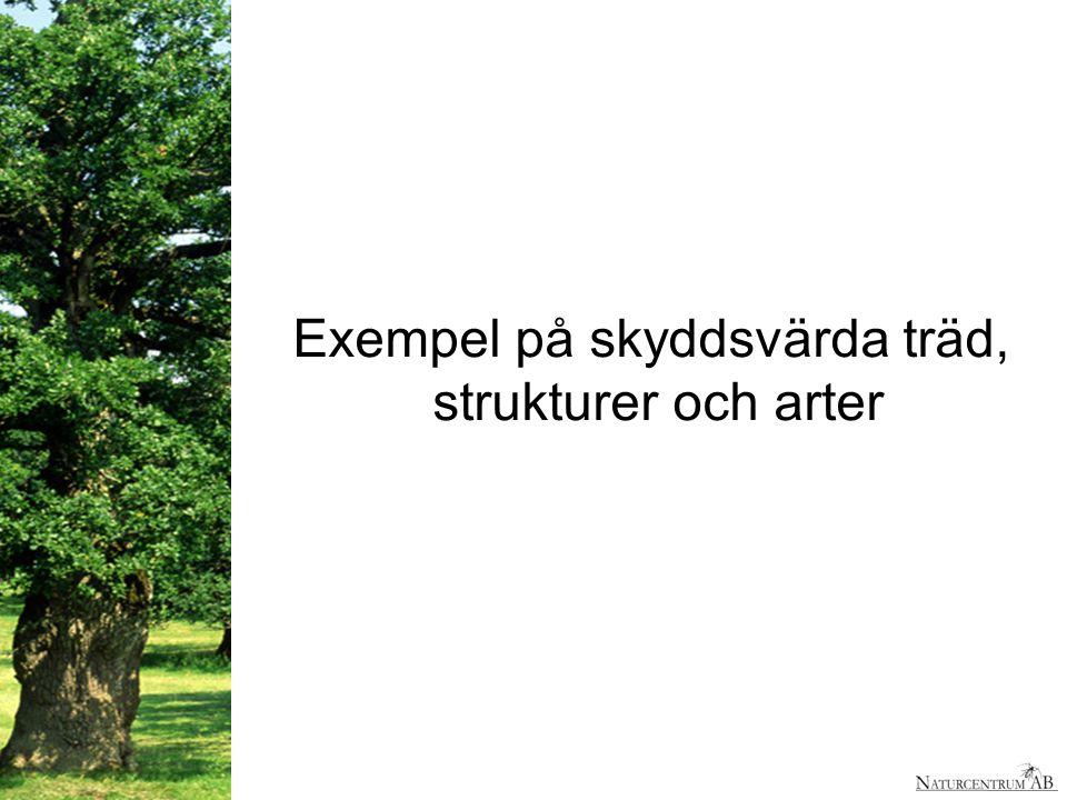 Exempel på skyddsvärda träd, strukturer och arter