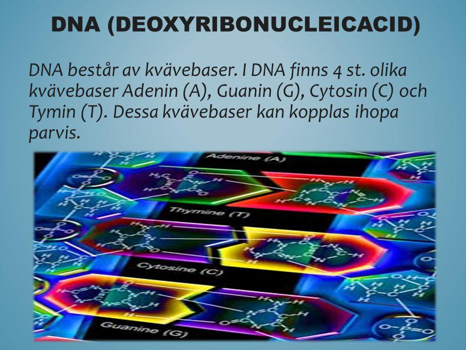 DNA består av kvävebaser. I DNA finns 4 st. olika kvävebaser Adenin (A), Guanin (G), Cytosin (C) och Tymin (T). Dessa kvävebaser kan kopplas ihopa par