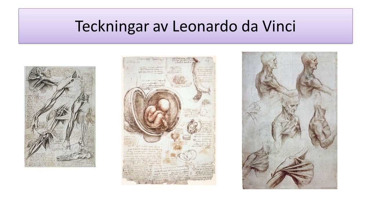 Teckningar av Leonardo da Vinci