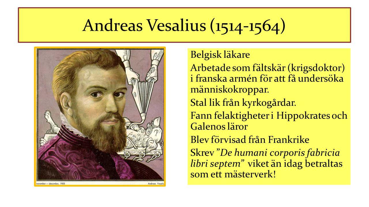 Andreas Vesalius (1514-1564) Belgisk läkare Arbetade som fältskär (krigsdoktor) i franska armén för att få undersöka människokroppar. Stal lik från ky