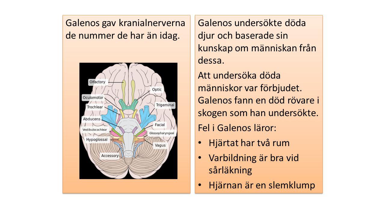 Galenos gav kranialnerverna de nummer de har än idag. Galenos undersökte döda djur och baserade sin kunskap om människan från dessa. Att undersöka död