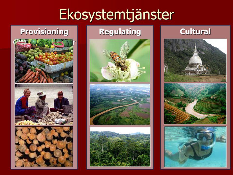 Biodiversiteten bygger upp ekosystemtjänsterna