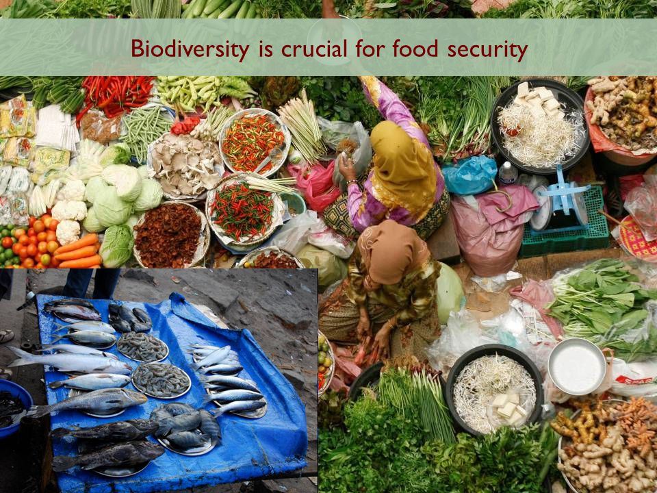 Biodiversity is crucial for food security