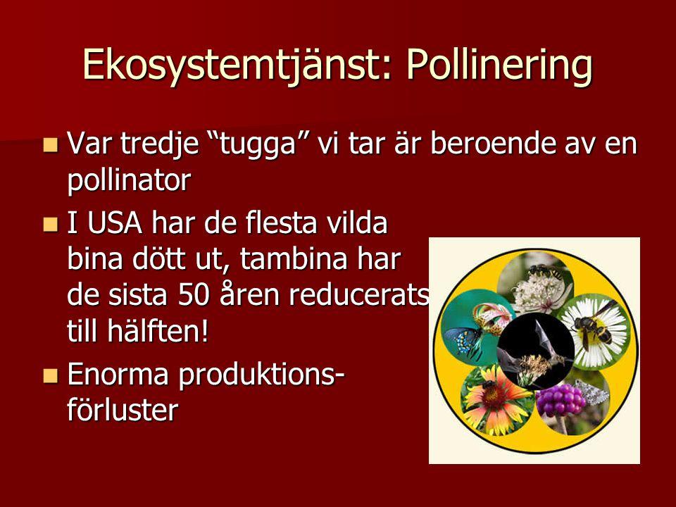 Ekosystemtjänst: Pollinering Var tredje tugga vi tar är beroende av en pollinator Var tredje tugga vi tar är beroende av en pollinator I USA har de flesta vilda bina dött ut, tambina har de sista 50 åren reducerats till hälften.