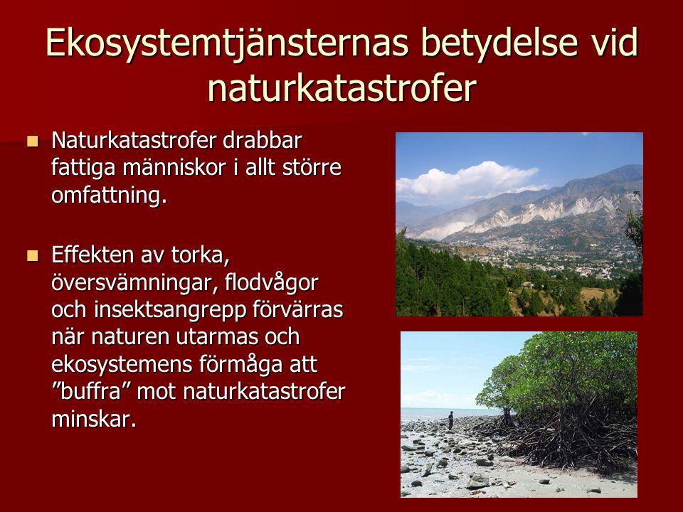 Ekosystemtjänsternas betydelse vid naturkatastrofer Naturkatastrofer drabbar fattiga människor i allt större omfattning. Naturkatastrofer drabbar fatt
