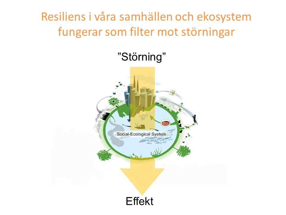 """Resiliens i våra samhällen och ekosystem fungerar som filter mot störningar """"Störning"""" Effekt"""