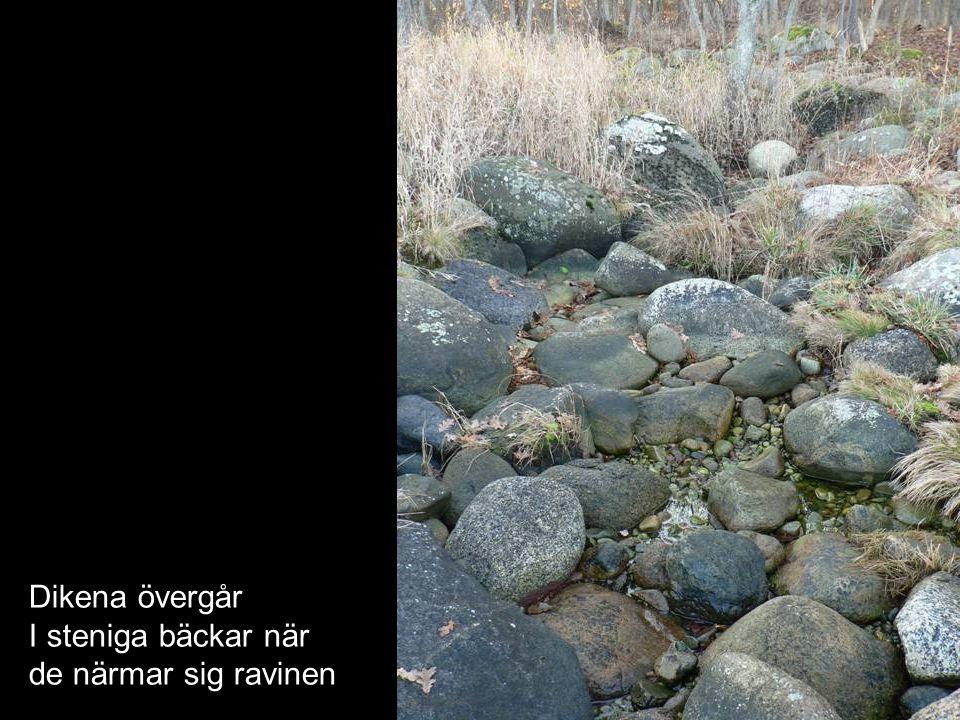 Dikena övergår I steniga bäckar när de närmar sig ravinen
