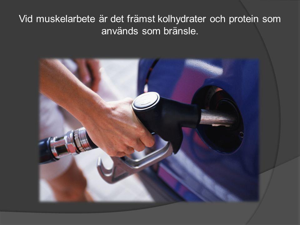 Vid muskelarbete är det främst kolhydrater och protein som används som bränsle.
