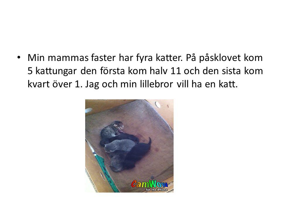 På onsdagen den 11:e april var vi i Halmstad och hälsade på mina sysslingar och mammas kusin som var nere från Stockholm.