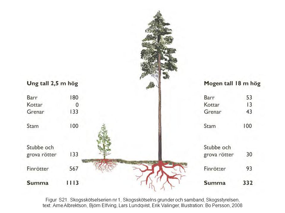 Figur S21. Skogsskötselserien nr 1, Skogsskötselns grunder och samband, Skogsstyrelsen, text: Arne Albrektson, Björn Elfving, Lars Lundqvist, Erik Val