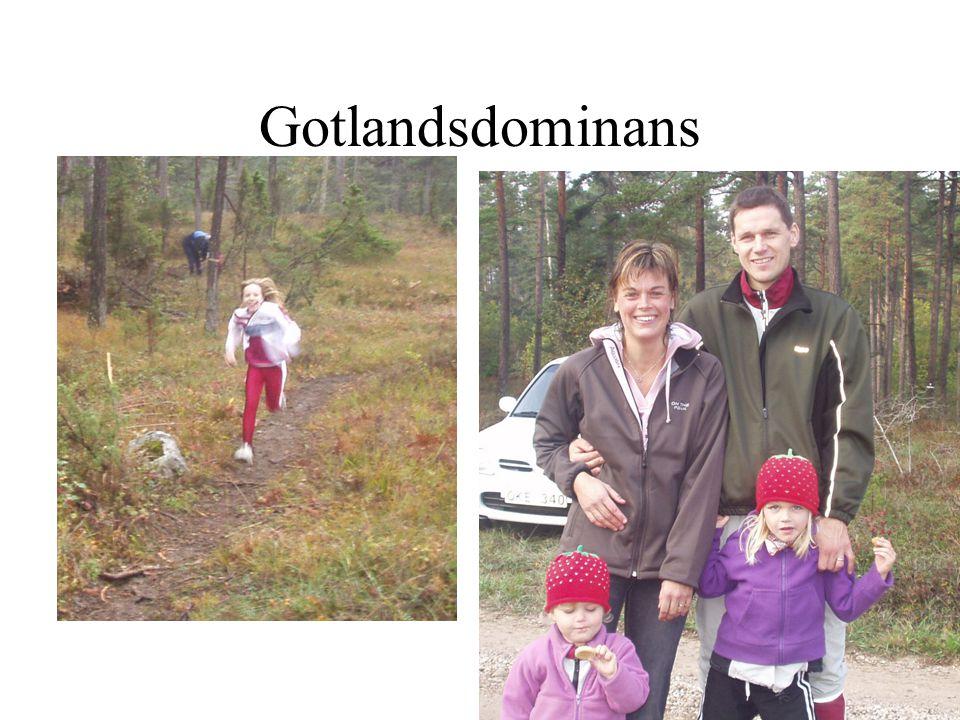 Gotlandsdominans