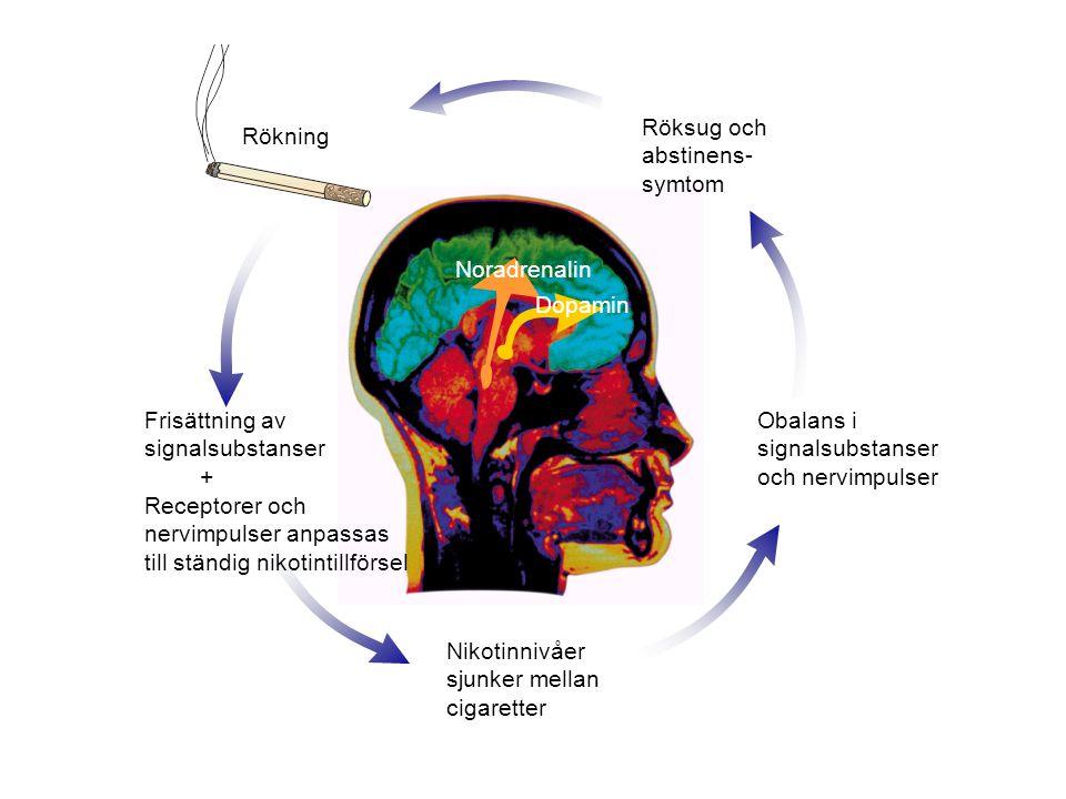Dopamin Noradrenalin Rökning Frisättning av signalsubstanser + Receptorer och nervimpulser anpassas till ständig nikotintillförsel Nikotinnivåer sjunk