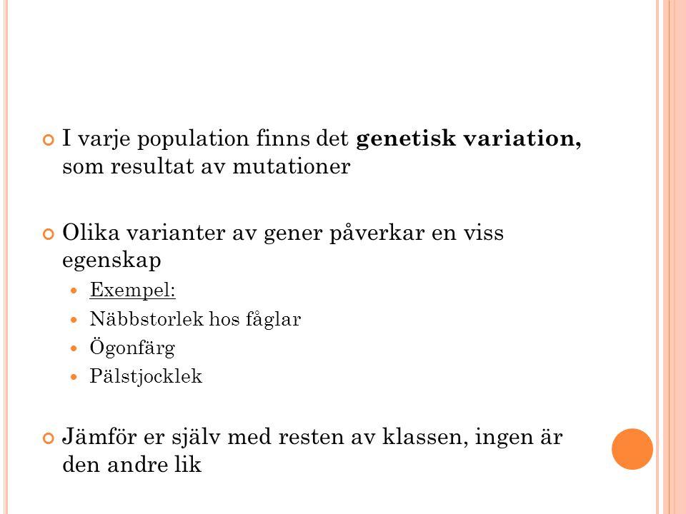 I varje population finns det genetisk variation, som resultat av mutationer Olika varianter av gener påverkar en viss egenskap Exempel: Näbbstorlek ho