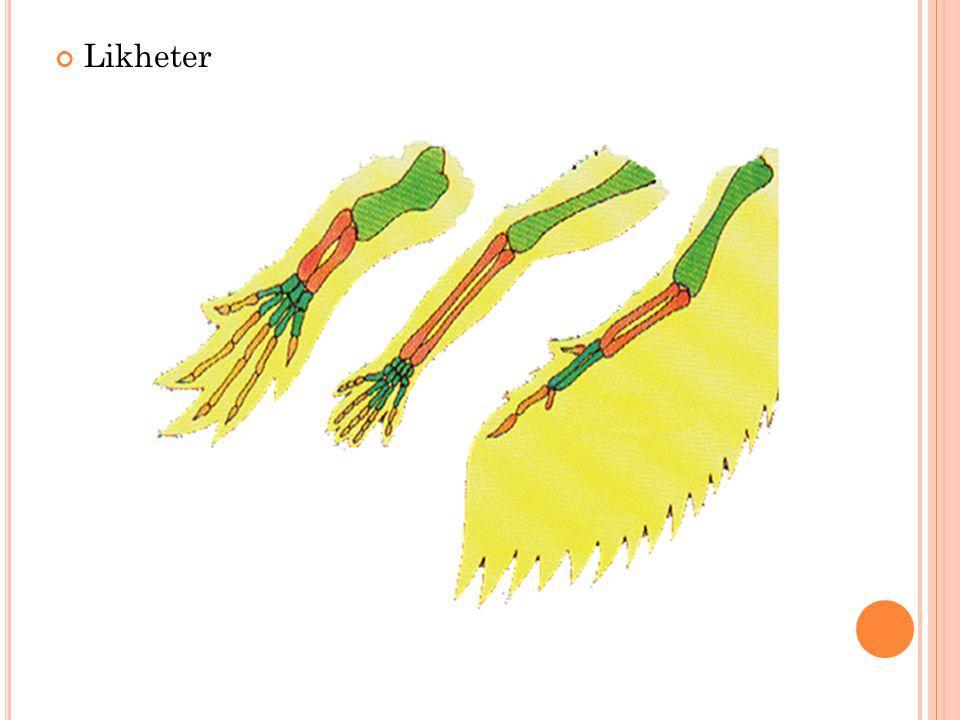 Likheter