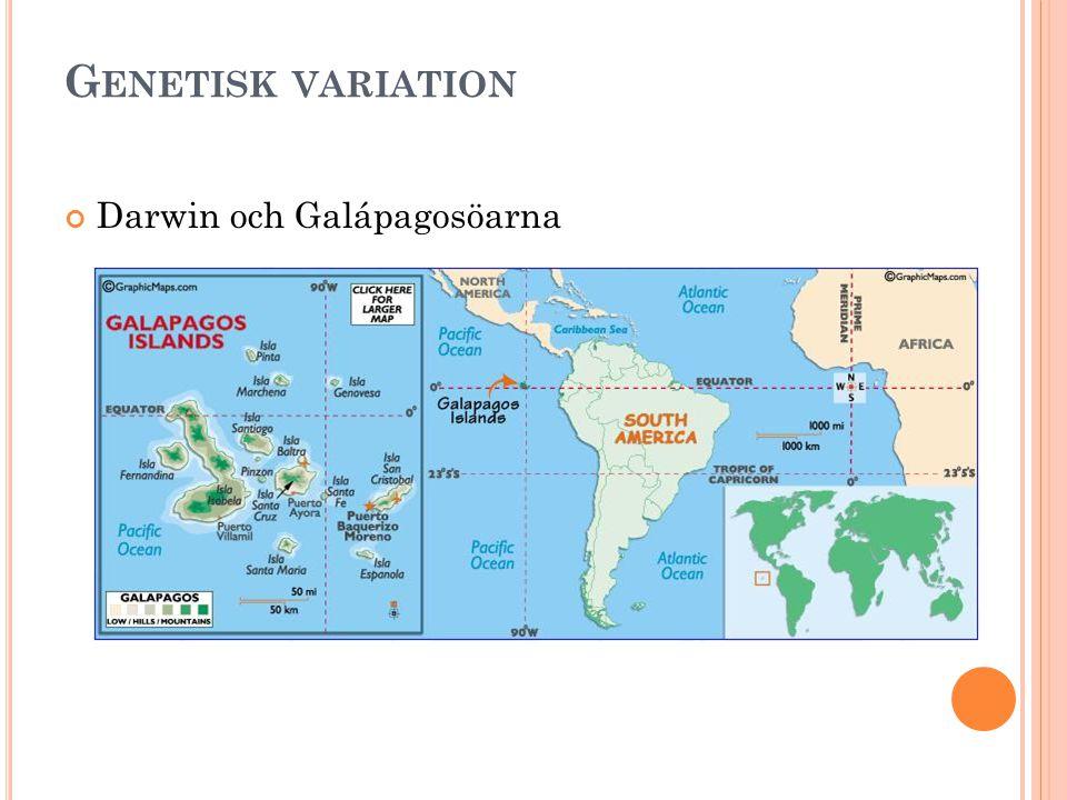 G ENETISK VARIATION Darwin och Galápagosöarna