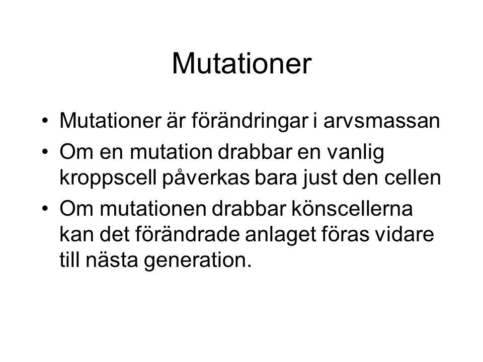 Mutationer Mutationer är förändringar i arvsmassan Om en mutation drabbar en vanlig kroppscell påverkas bara just den cellen Om mutationen drabbar könscellerna kan det förändrade anlaget föras vidare till nästa generation.
