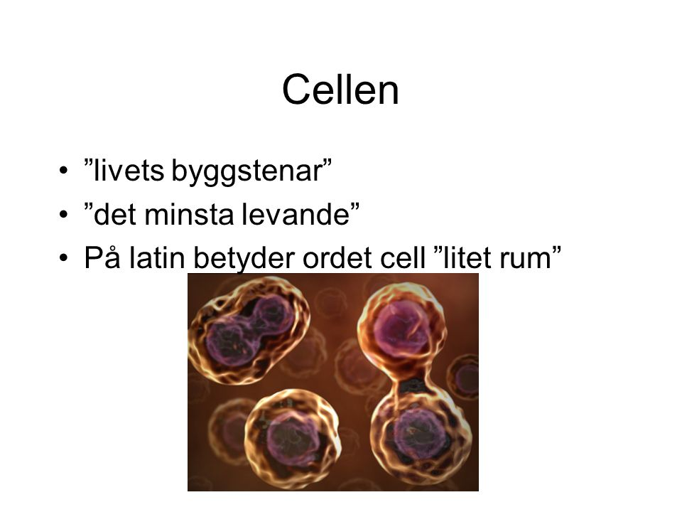 """Cellen """"livets byggstenar"""" """"det minsta levande"""" På latin betyder ordet cell """"litet rum"""""""