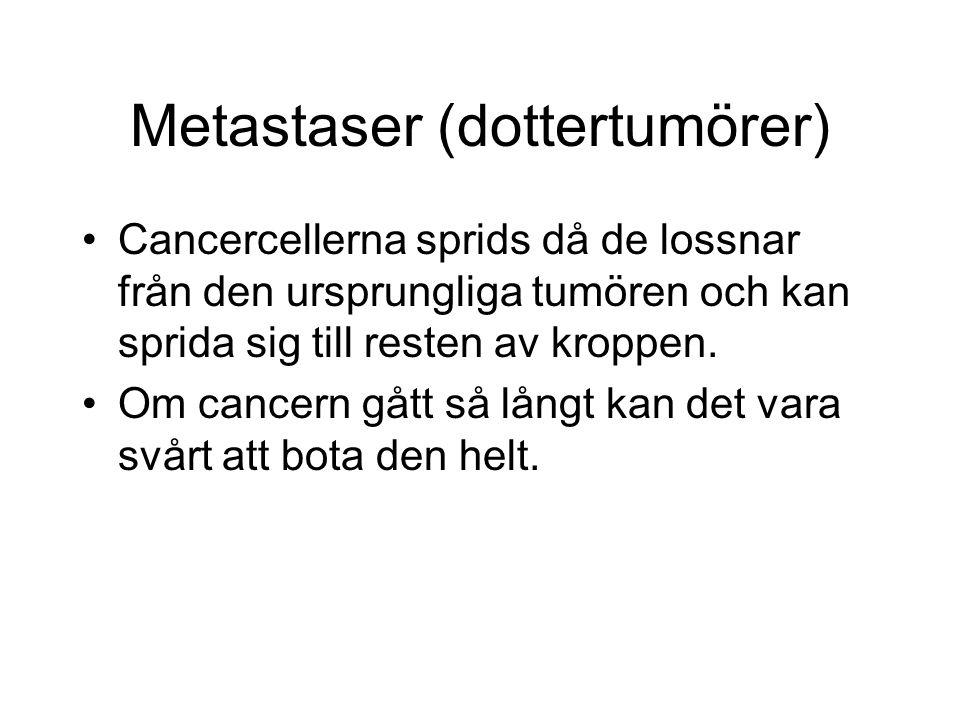 Metastaser (dottertumörer) Cancercellerna sprids då de lossnar från den ursprungliga tumören och kan sprida sig till resten av kroppen.