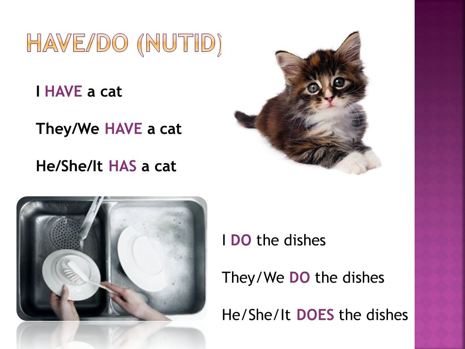 I HAVE a cat They/We HAVE a cat He/She/It HAS a cat I DO the dishes They/We DO the dishes He/She/It DOES the dishes