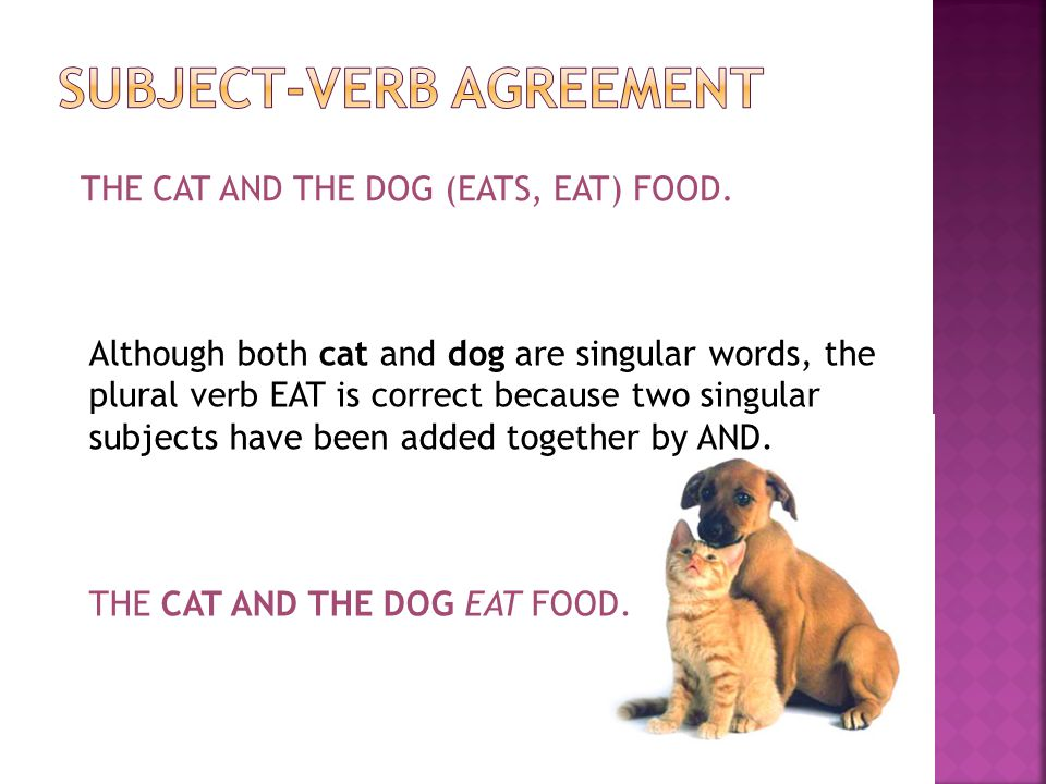 THE CAT AND THE DOG (EATS, EAT) FOOD. Although both cat and dog are singular words, the plural verb EAT is correct because two singular subjects have