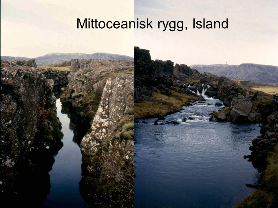 Mittoceanisk rygg, Island