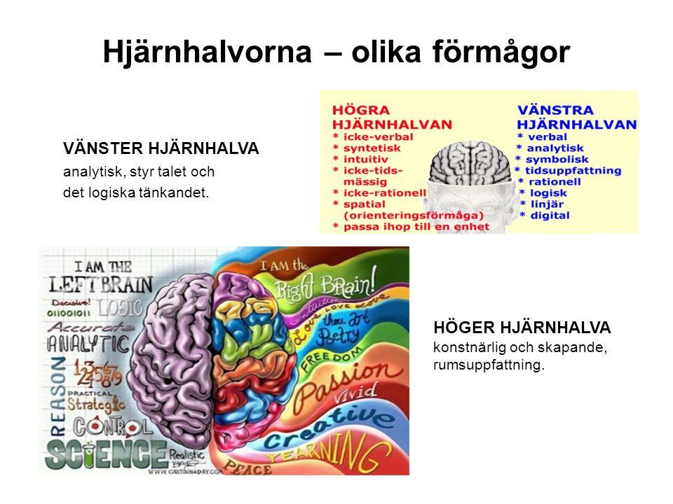 Hjärnhalvorna – olika förmågor VÄNSTER HJÄRNHALVA analytisk, styr talet och det logiska tänkandet. HÖGER HJÄRNHALVA konstnärlig och skapande, rumsuppf