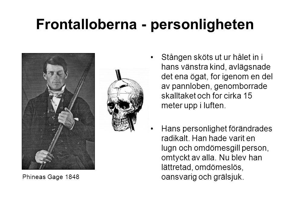 Frontalloberna - personligheten Stången sköts ut ur hålet in i hans vänstra kind, avlägsnade det ena ögat, for igenom en del av pannloben, genomborrad