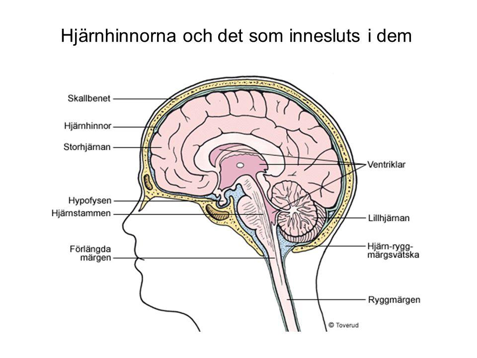 Hjärnhinnorna och det som innesluts i dem