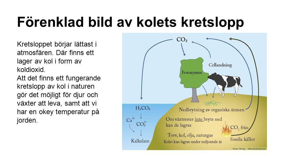 Förenklad bild av kolets kretslopp Kretsloppet börjar lättast i atmosfären. Där finns ett lager av kol i form av koldioxid. Att det finns ett fungeran