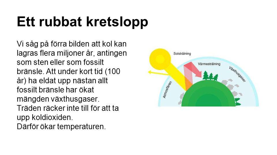 Ett rubbat kretslopp Vi såg på förra bilden att kol kan lagras flera miljoner år, antingen som sten eller som fossilt bränsle. Att under kort tid (100