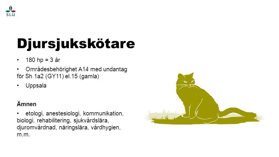 180 hp = 3 år Områdesbehörighet A14 med undantag för Sh 1a2 (GY11) el.15 (gamla) Uppsala Ämnen etologi, anestesiologi, kommunikation, biologi, rehabilitering, sjukvårdslära, djuromvårdnad, näringslära, vårdhygien, m.m.