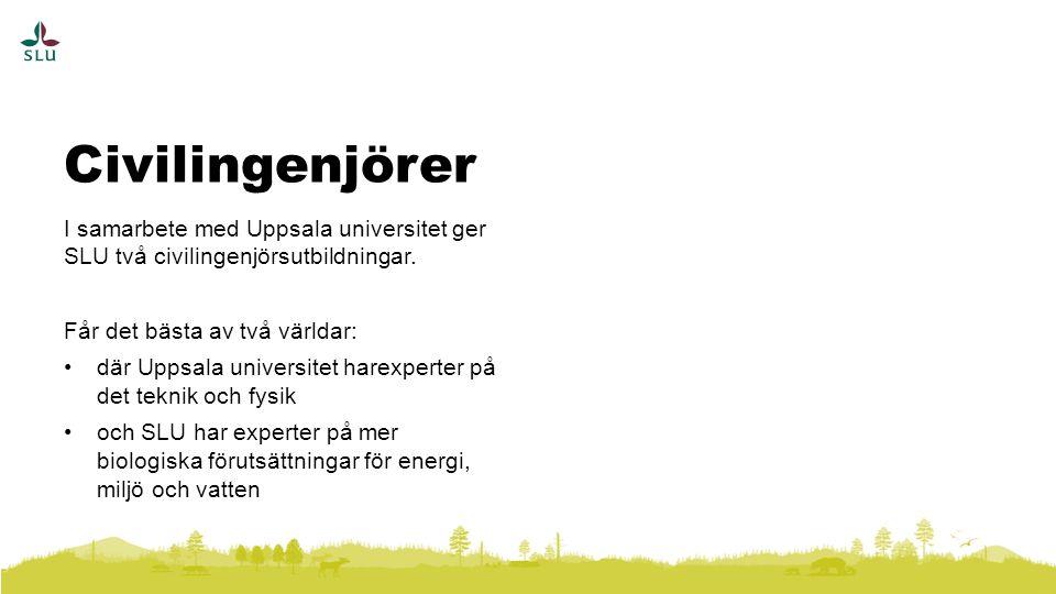 I samarbete med Uppsala universitet ger SLU två civilingenjörsutbildningar.