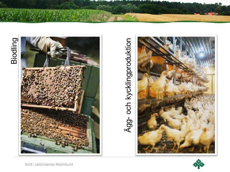 Sid 8 | Lantbrukarnas Riksförbund Biodling Ägg- och kycklingproduktion