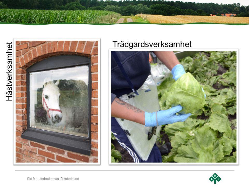 Sid 9 | Lantbrukarnas Riksförbund Hästverksamhet Trädgårdsverksamhet